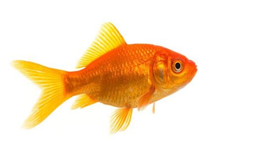 تعبیر خواب ماهی گرفتن امام صادق از آب رودخانه با دست و با تور ماهیگیری