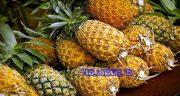 خواص آناناس ، برای معده در طب سنتی و کودکان برای استخوان و در بارداری