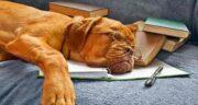 جملات معروف در مورد سگ ؛ متن راجع به معرفت سگ از خیلیا بیشتره